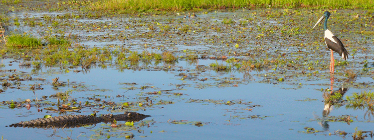 Yellow Waters sunrise and sunset scenic wildlife cruises from Cooinda off the Kakadu Highway in the south end of Kakadu National Park Australia